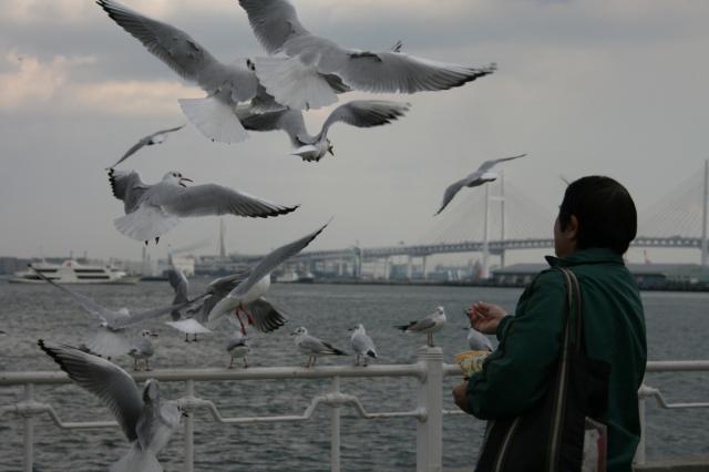 Yokohama birds